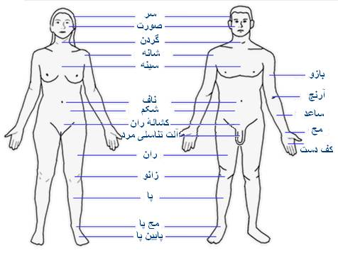 آناتومی بدن زن و مرد - دکتر حسام فیروزی